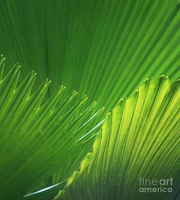 Palm Leaves Poster by Atiketta Sangasaeng