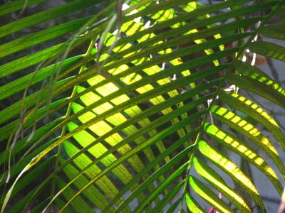 Palm Leaves In Sun Poster