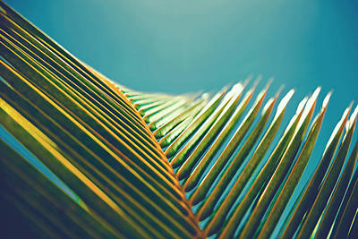 Palm Leaves In The Sun Poster by Fbmovercrafts