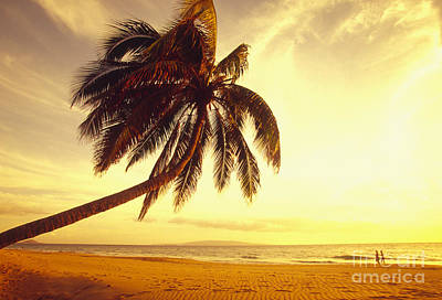 Palm Over The Beach Poster by Ron Dahlquist - Printscapes