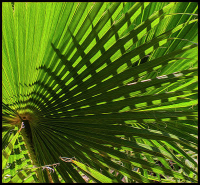 Poster featuring the photograph Palm Pattern No.1 by Mark Myhaver