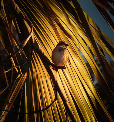 Palm Spring Sparrow Poster by Karen Wiles