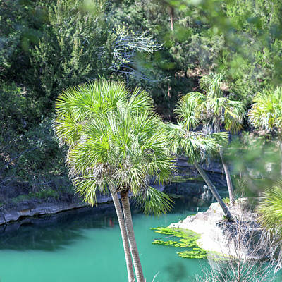 Palm Tree Blue Pond Poster