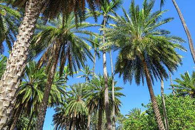 Palm Tree Forest Poster by Jera Sky