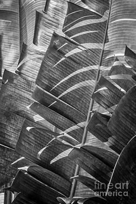 Palm Tree Leafs Poster by Ernesto Ruiz