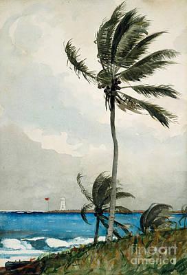 Palm Tree, Nassau, 1898 Poster by Winslow Homer