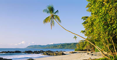 Palm Tree On The Beach, Montezuma Poster by Panoramic Images