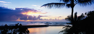 Palm Tree On The Beach, Wailua Bay Poster by Panoramic Images