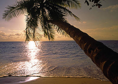 Palm Tree Over The Beach In Costa Rica Poster