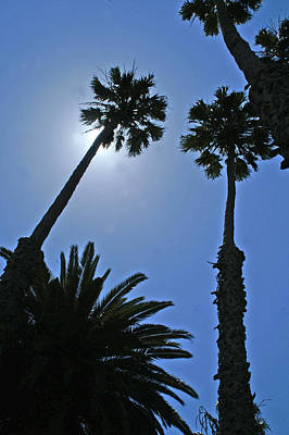 Poster featuring the photograph Palm Tree Silouette by Gary Brandes