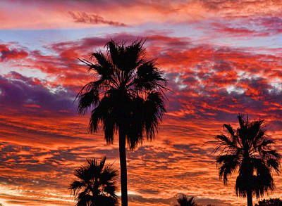 Palm Tree Sunset Poster by James BO  Insogna