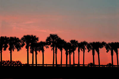 Poster featuring the photograph Palm Tree Sunset by Joel Witmeyer