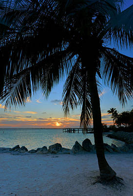 Poster featuring the photograph Palm Tree Sunset by Stephen  Vecchiotti