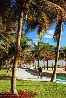Palm Tree Way Poster by James Kirkikis