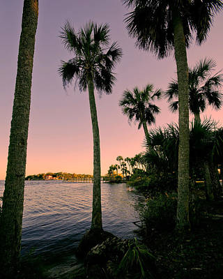 Palm Trees And Pink Skies Poster