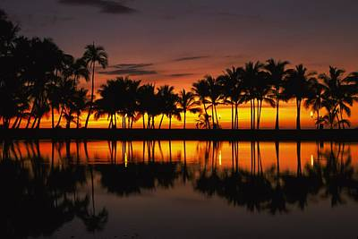Palm Trees And Sunset Landscape Poster