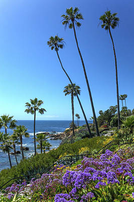 Poster featuring the photograph Palm Trees At Heisler Park by Cliff Wassmann