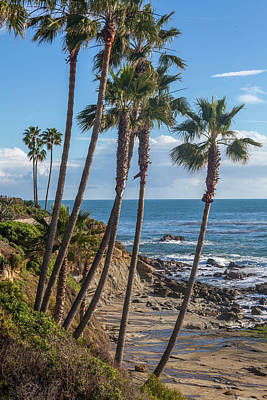 Poster featuring the photograph Palm Trees At Monument Point Laguna Beach by Cliff Wassmann
