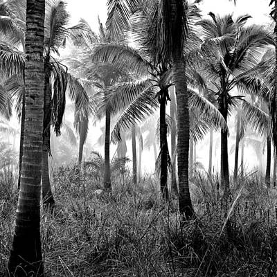 Poster featuring the photograph Palm Trees - Black And White by Marianna Mills