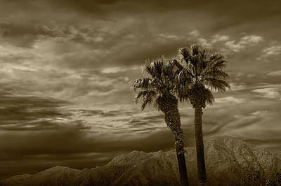 Poster featuring the photograph Palm Trees By Borrego Springs In Sepia Tone by Randall Nyhof