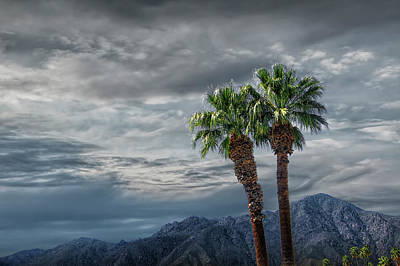 Poster featuring the photograph Palm Trees By Borrego Springs In The Anza-borrego Desert State Park by Randall Nyhof