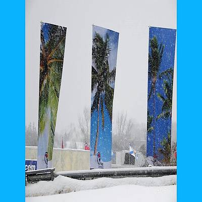 Palm Trees In Snowstorm Poster