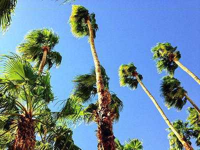 Palm Trees Looking Up Poster