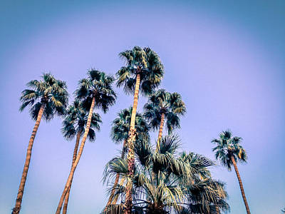Palm Trees Palm Springs Summer Poster