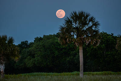 Poster featuring the photograph Palmetto Full Moon by RC Pics