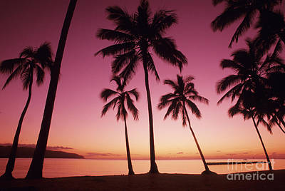 Palms Against Pink Sunset Poster by Carl Shaneff - Printscapes