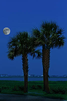 Poster featuring the photograph Palms And Moon At Morse Park by Bill Barber
