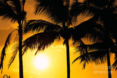 Palms At Sunset Poster