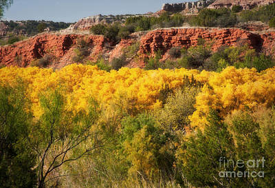 Palo Duro Canyon Fall Colors Poster by Fred Lassmann
