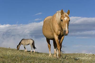 Palomino Mustang Mare Poster