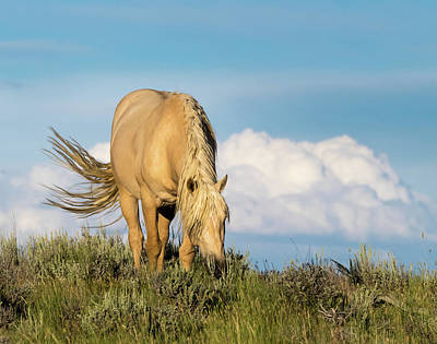 Poster featuring the photograph Palomino Wild Stallion In The Evening Light by Nadja Rider