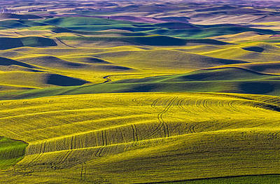 Palouse 5 Poster by Thomas Hall
