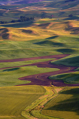 Palouse Hills Poster by Mike  Dawson