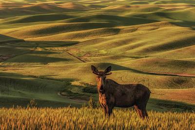 Palouse  Male Moose Poster by Janet Ballard