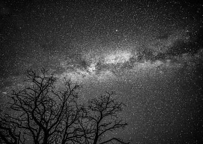 Palouse Night Sky And Tree 3930 Poster