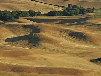 Palouse Patchwork By Jean Noren Poster by Jean Noren