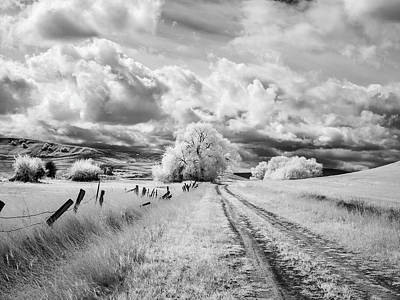 Palouse Road And Tree Ir 0996 Poster