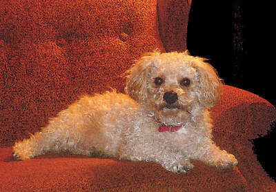 Pampered Pooch  Poster by Margie Avellino