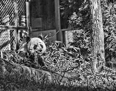 Panda Feast Poster