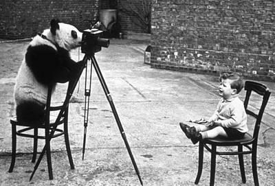 Panda Photographer Poster