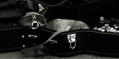 Panhandling Dog Poster by Julie Niemela