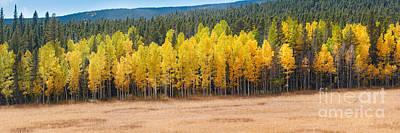 Panorama Of Aspen Grove Fall Foliage Peak To Peak Highway - Rocky Mountains Colorado State Poster by Silvio Ligutti
