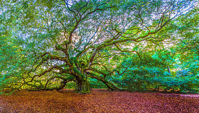 Panoramic Angel Oak Tree Charleston Sc Poster