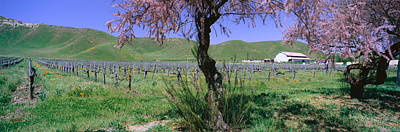 Panoramic View Of Golden California Poster by Panoramic Images