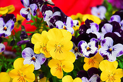 Pansies And Red Cart Poster