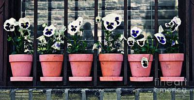Pansies On The Window Ledge Poster by Sarah Loft